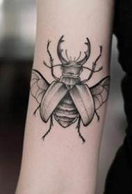 精致的一组小昆虫纹身图案