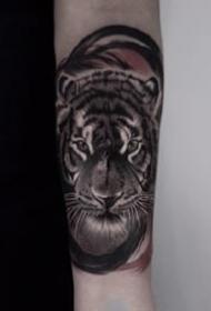 一组写实风格的老虎纹身图案